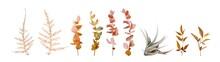 Vector Watercolor Floral Autum...