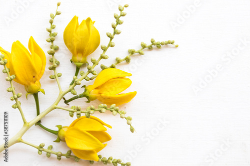 yellow flowers ylang ylang local flora of asia decoration flat lay style on back Billede på lærred