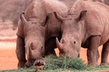 Wild African Animals. Portrai...