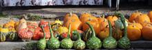 Colorful Ornamental Pumpkins, ...