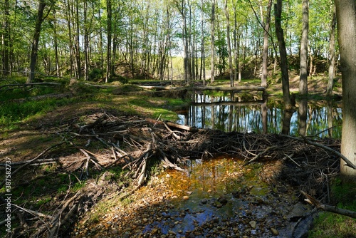 Fotografía View of a beaver habitat with dams, ponds and trees at the Plainsboro Preserve i