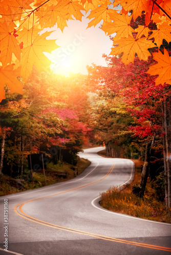Slika na platnu Sunny autumn winding road in the forest. Soft selective focus.
