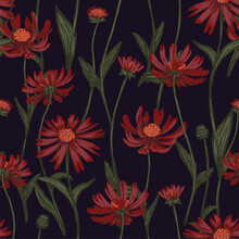 Cone Flower Or Echinacea Plants Seamless Pattern. Hand Drawn Vector Illustration. Realistic Botanical Background. Wildflowers Sketches. Colored Vintage Design, Print, Fabric, Textile, Wrap, Wallpaper.