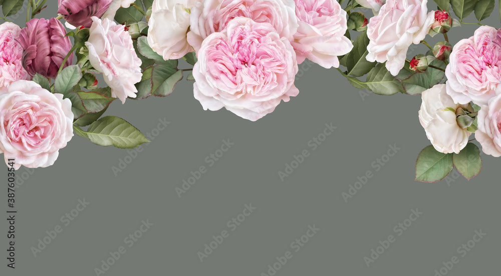 Fototapeta Floral banner, header with copy space. Blush pink roses, carmine tulips isolated on warm grey background. Natural flowers wallpaper or greeting card.