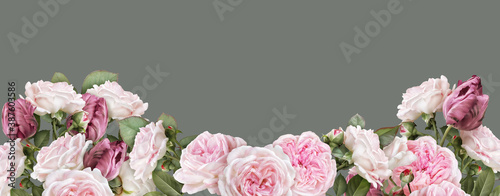 Obraz Floral banner, header with copy space. Blush pink roses, carmine tulips isolated on warm grey background. Natural flowers wallpaper or greeting card. - fototapety do salonu