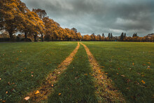 Autumn Forest Leaves, Grass An...