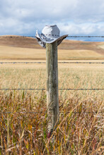 Wooden Barbed Wire Fence And Cowboy Hat On A Post. Rural Wheat Field And Prairie Farmland. Alberta Cowboy Trail Hat Resting On Fence Post