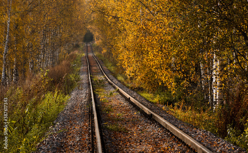 Old railway in autumn forest. Blurred background Fotobehang