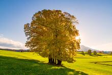 Baum - Herbst - Sonne - Wiese - Berge