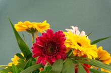 A Bunch Of Barberton Daisy Colorful Flowers In A Vase On Green Background