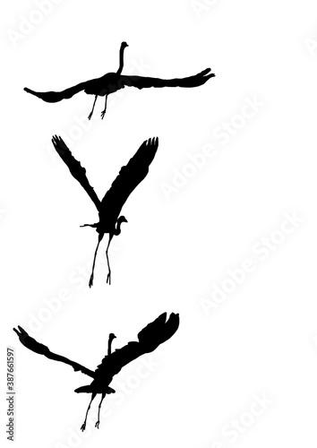 oiseau aquatique vole Fototapet