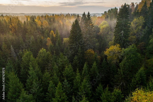 Fotografía Birds eye view of thick forest during autumn sunrise with fog.