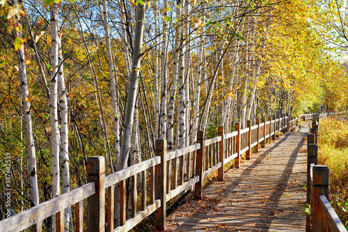 Fototapeta The wooden trestle in autumn forest.