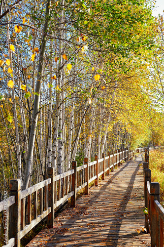 Fotografie, Obraz The wooden trestle in autumn forest.
