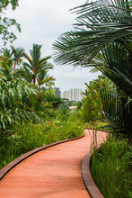 Singapore Oct 23rd 2020: Rasau Walk In Jurong Lake Gardens. A Meandering Boardwalk Along The Water's Edge, Enables Visitors To Get Up Close With Nature.