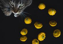 Yellow Pumpkins Next To A Cat Close Up