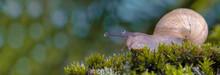 Macro Photography Snail Or Slu...