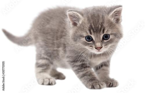 Slika na platnu Little fluffy kitten isolated on a white