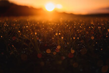 Beautiful Close Up Macro View Of A Grass Meadow With Waterdrop Details And Orange Morning Sunrise Light And Blurry Dreamy And Magic Background. Abstract Wie Of Water Drops. Harz National Park