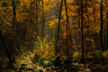 View Into A Forest In Autumn I...