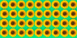 Leinwandbild Motiv Top view flowers pattern texture on  background