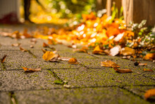 Selective Sharpness Of Autumn Leaves On The Pavement With Text Free Space