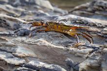 Close Up Crab