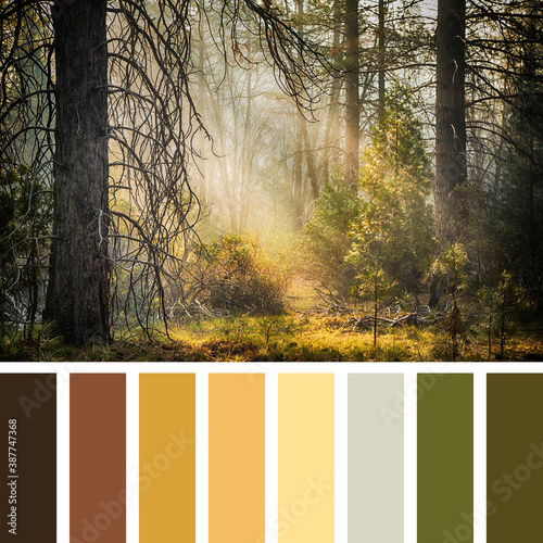 Canvas Print Yosemite palette