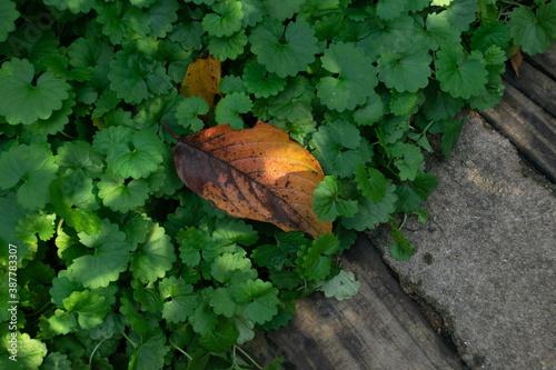 Fotomural 小道の脇の草むらに落ちた枯れ葉