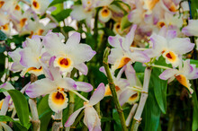 Orchideenhaus Im Berggarten H...