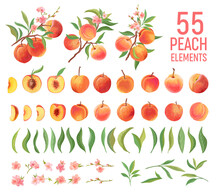 Peach Fruit Watercolor Element...
