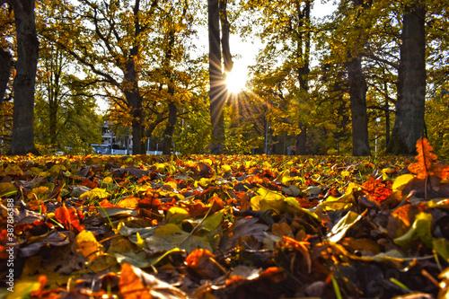Fototapeta A colorful autumn in Estonia  obraz na płótnie