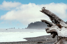 Seagull On Large Driftwood Misty Ocean Beach Landscape