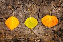 Three Fall Leaves On An Old Ru...