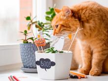 Cute Ginger Cat Sniffs Flower ...