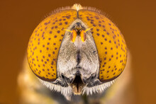 Extreme Close Up Of A Hoverfly...
