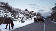 Brown Stallion Horses Standing...