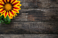 Gazania Flower Top Left With Wooden Background