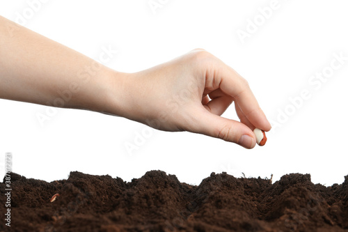 Fotografering Woman putting bean into fertile soil against white background, closeup