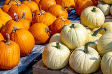 Orange And Yellow Pumpkins For...