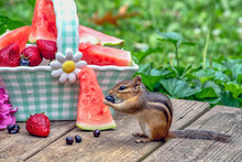 Furry Chipmunk Enjoys Fresh Su...