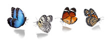 Set Of Different Beautiful Butterflies On White Background. Banner Design