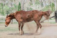Horse Shaking