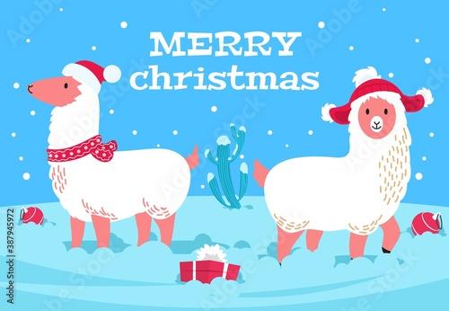 Naklejka premium Christmas alpaca. Holiday llama animal, snowy cactus. Xmas lama wear scarf and hats, winter new year cute wool animals vector poster. Llama and alpaca christmas funny, xmas character illustration