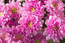 Bright Blooming Light Purple C...