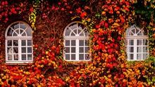 Buntes Herbstlaub Am Haus Mit ...