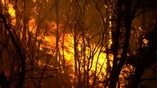 Large Forest Fire With Tall Flames And Orange Glow