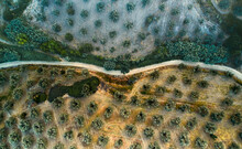 Aerial View Of An Olive Grove In Petrizzi, Calabria, Italy.