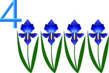 Number Four, Iris Flower.