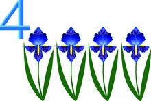 Number Four, Iris Flower.